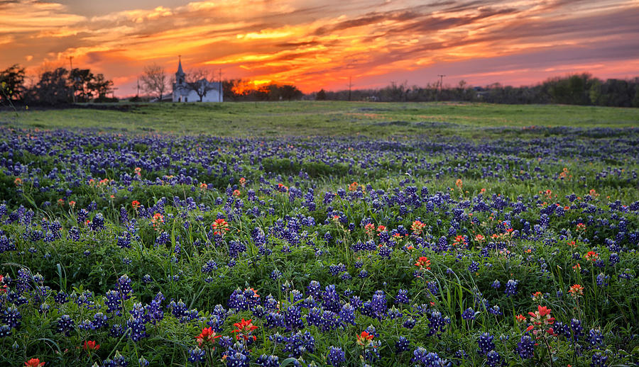 Bluebonnet Sunset by Chris Multop