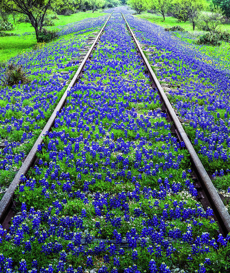 Bluebonnet Wildflowers And Old Railroad Photograph by Dszc