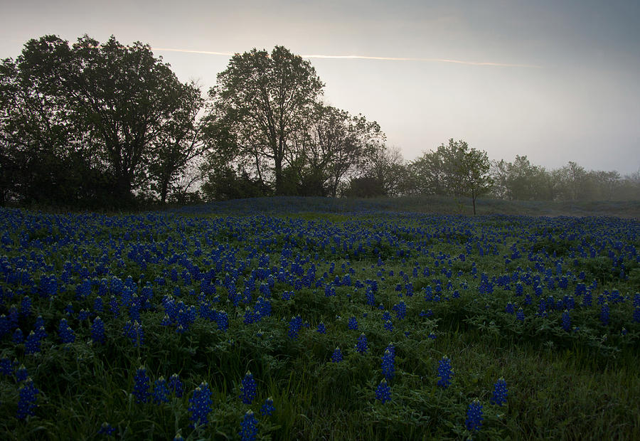 Bluebonnets Photograph - Bluebonnets On A Hazy Morning by Mark Alder