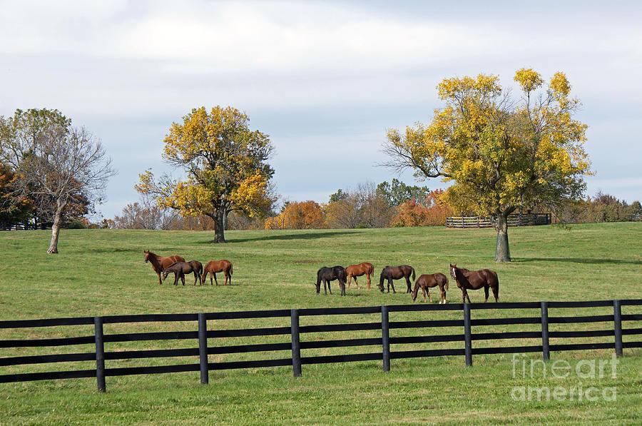 Kentucky Painting - Bluegrass Autumn by Roger Potts