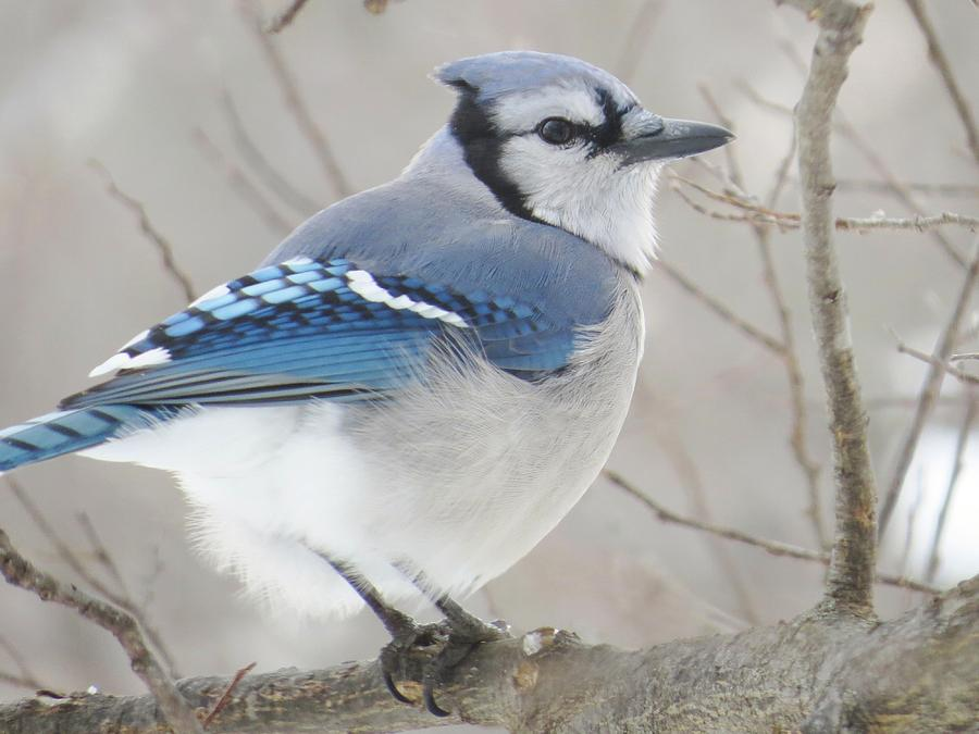 Birds Photograph - Blues And Grays by Lori Frisch