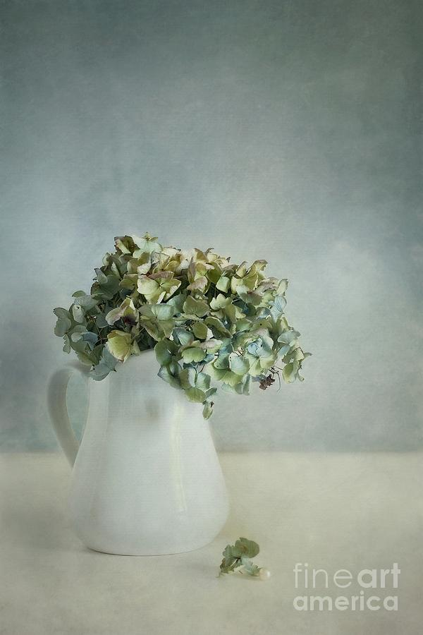 Hydrangea Photograph - Blues by Priska Wettstein