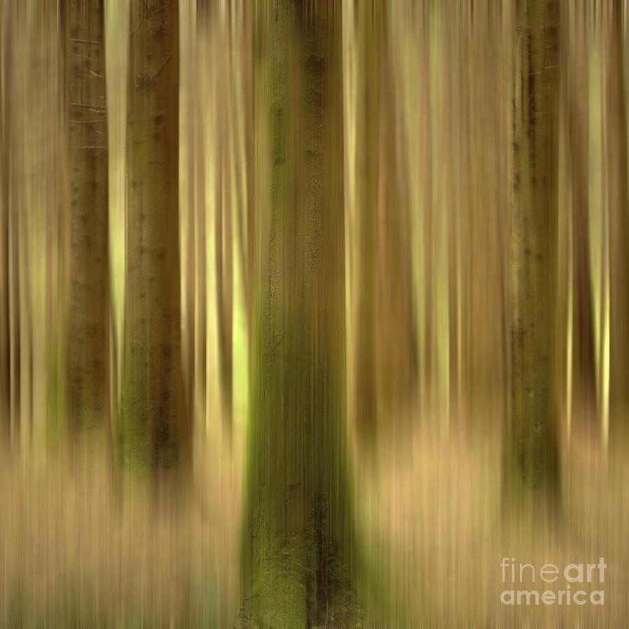 Blurred Trunks In A Forest Photograph by Bernard Jaubert