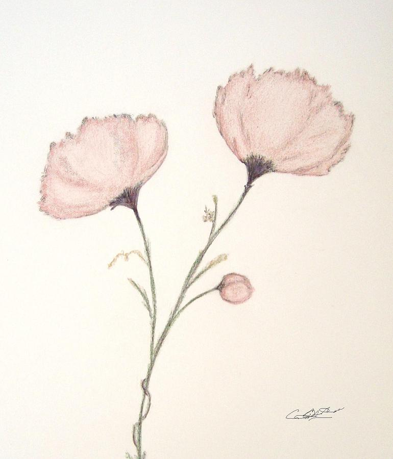 Peonies Drawing - Blush Peonies by Christine Corretti