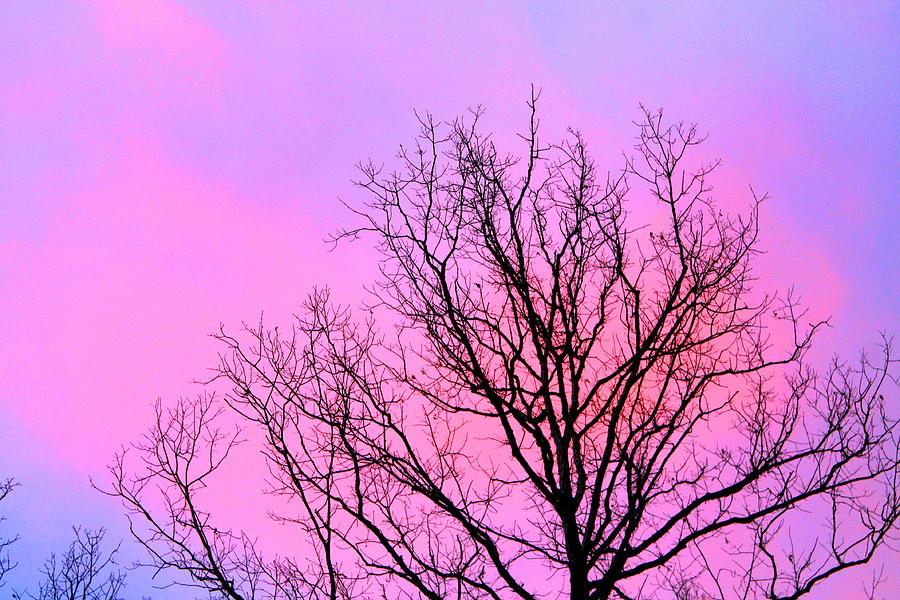 Trees Photograph - Blushing Sky by Candice Trimble