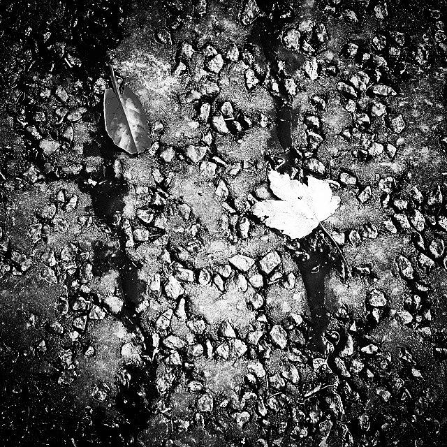 Beautiful Photograph - Leaves in the Wet Black n White by J Roustie