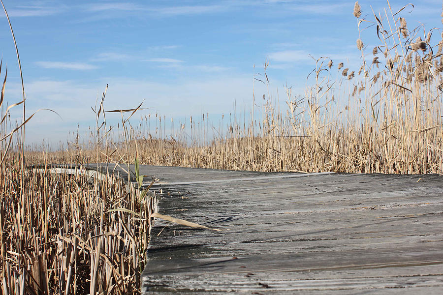 Landscape Photograph - Boardwalk 2 by K Hines