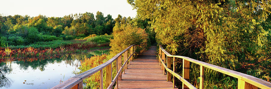 Horizontal Photograph - Boardwalk In A Forest, Magee Marsh by Panoramic Images
