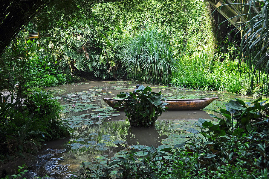 Boat Photograph - Boat In Jungle by Judith Russell-Tooth