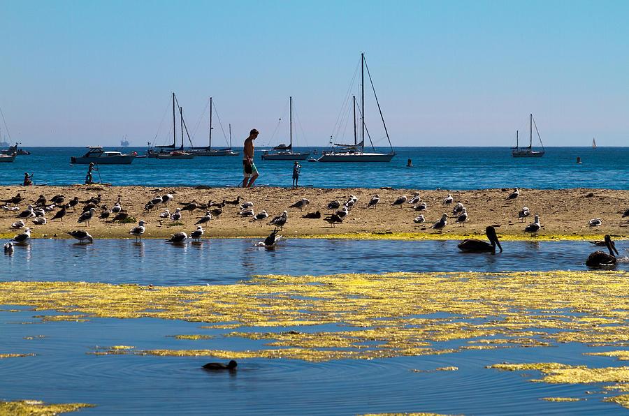 Beach Photograph - Boats And Birds by Bernard  Barcos