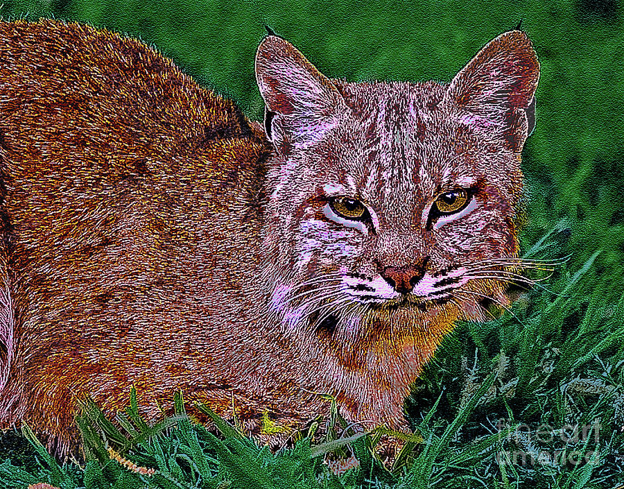 Animal Digital Art - Bobcat Sedona Wilderness by Bob and Nadine Johnston