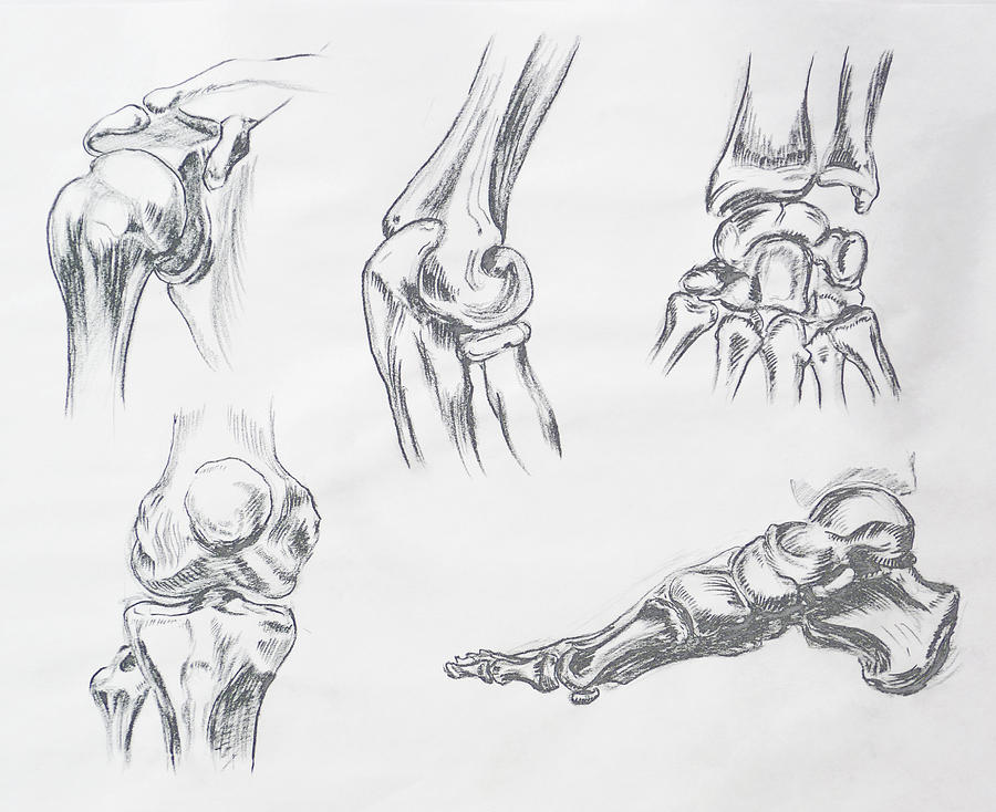 Body Parts Anatomy Study Drawing By Irina Sztukowski