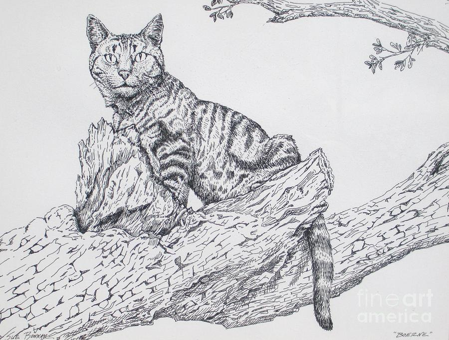 Cat In Tree Drawing - Boerne by Sue Bonnar