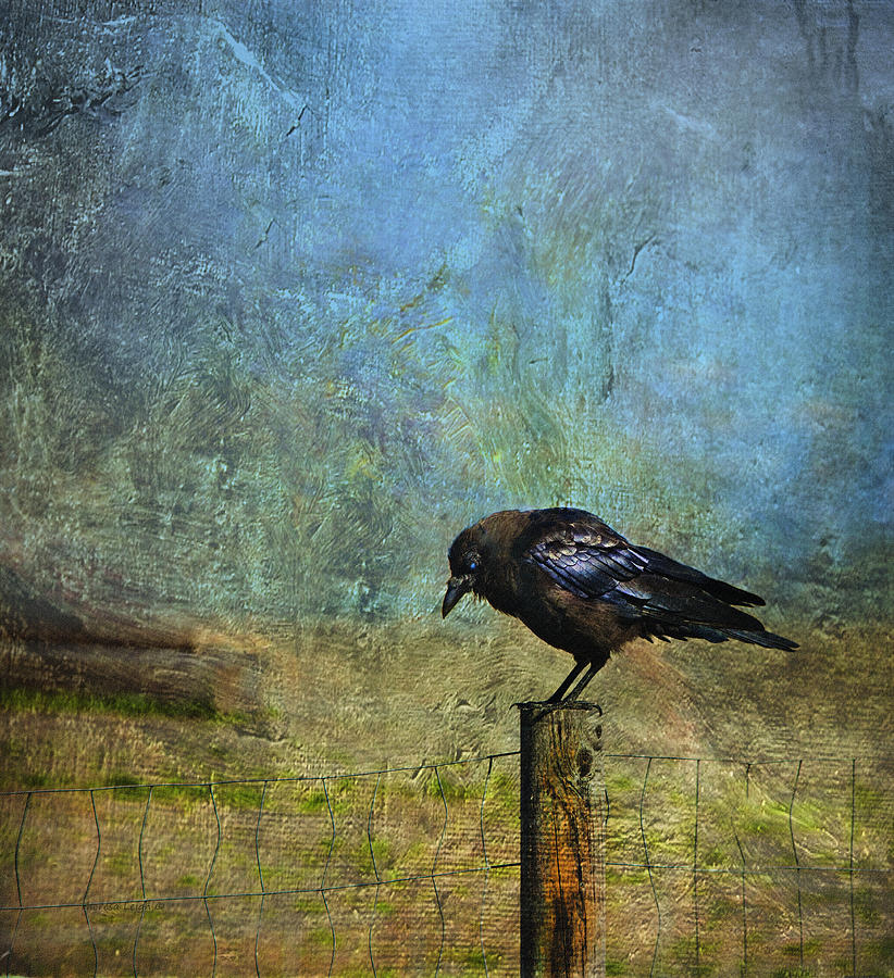 Crow Photograph - Bold Amiable Ebon Outlaw by Theresa Tahara
