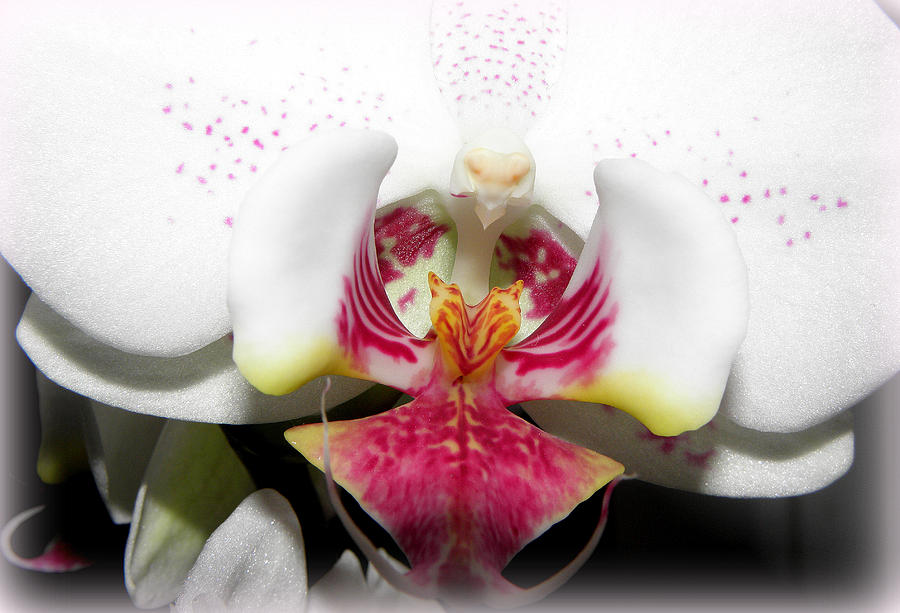 White Orchid Photograph - Bold And Up Front by Kim Galluzzo Wozniak