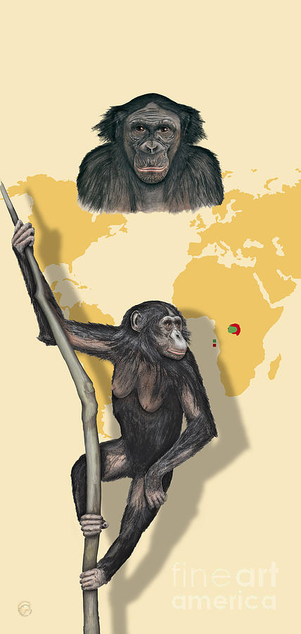 Bonobo Pan Paniscus - Shrinking Habitat - Zoo Panels  Great Apes - Schautafel Menschenaffen Painting