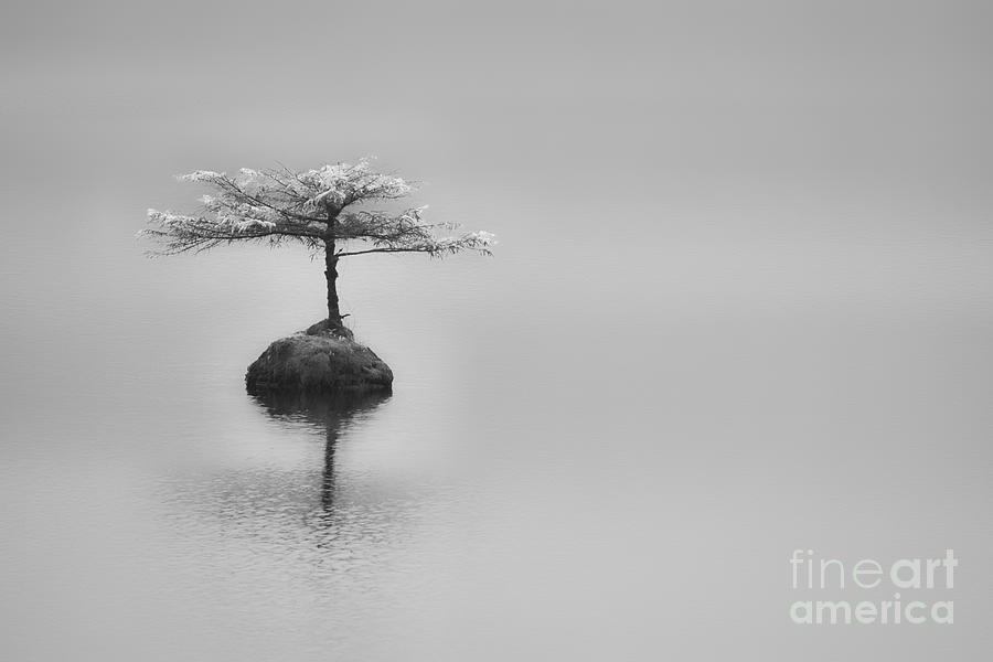 2013 Photograph - Bonsai At Fairy Lake by Carrie Cole