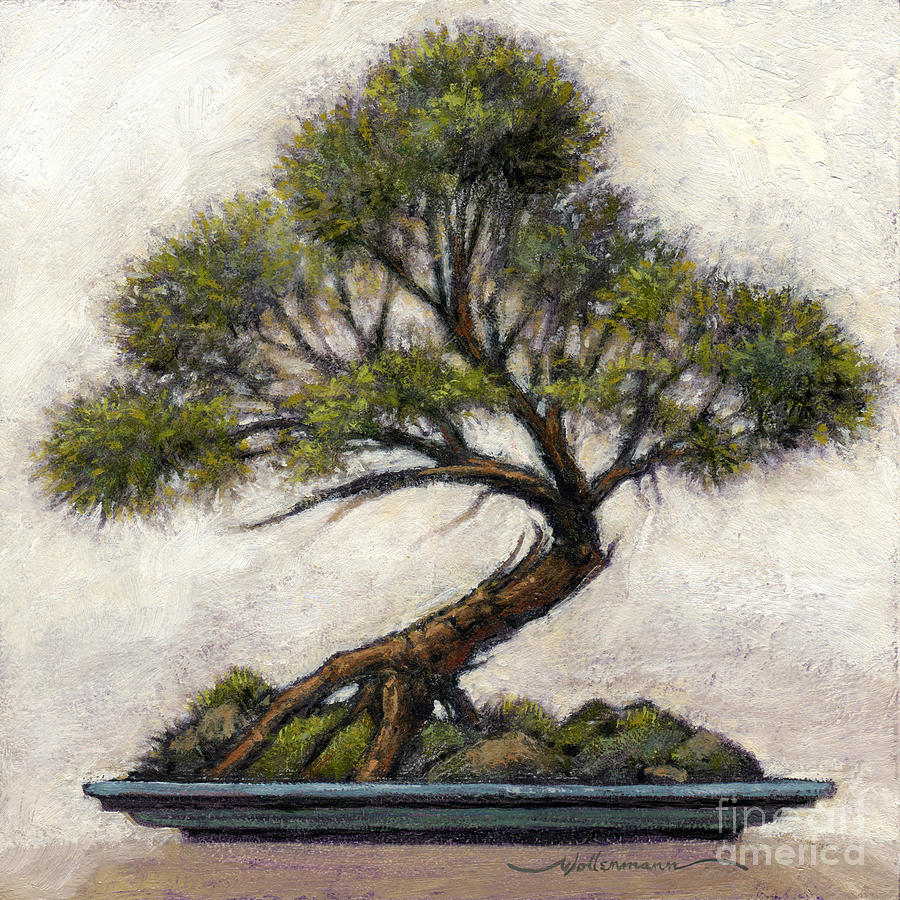 Bonsai Cedar by Randy Wollenmann
