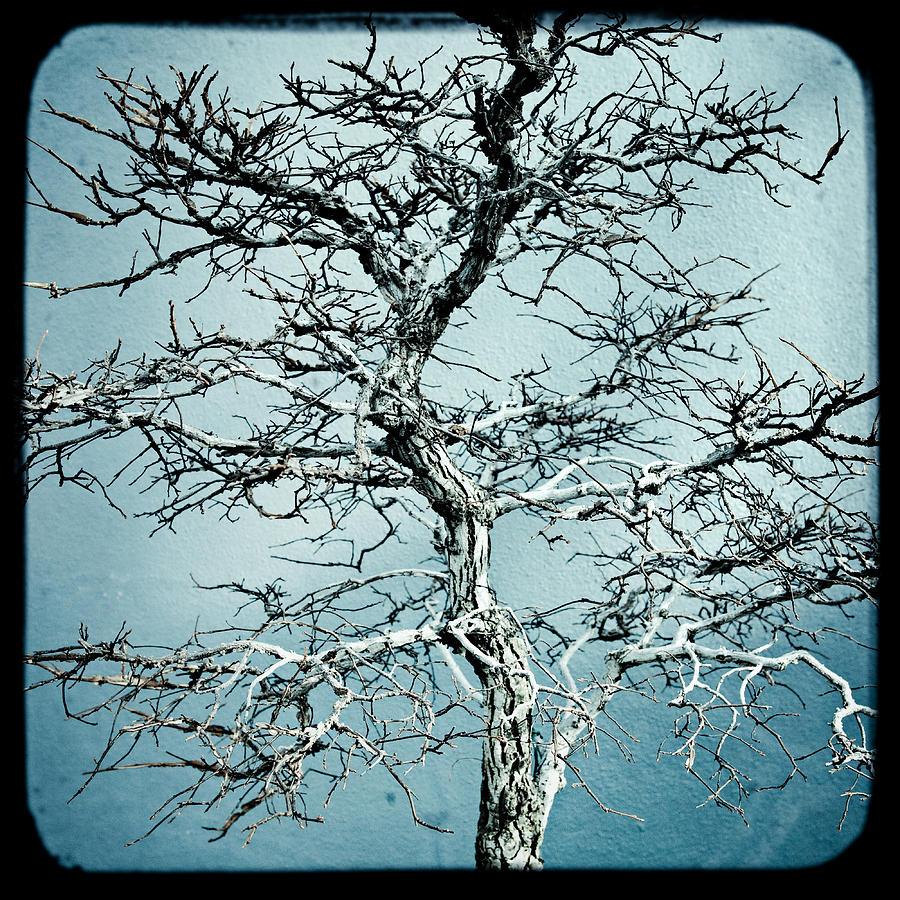 Abstract Photograph - Bonsai by Gary Heller