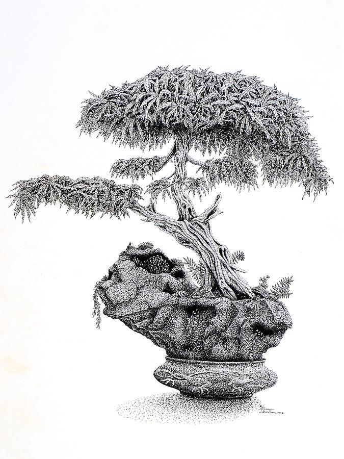 Bonsai Drawing By Sam Davis Johnson