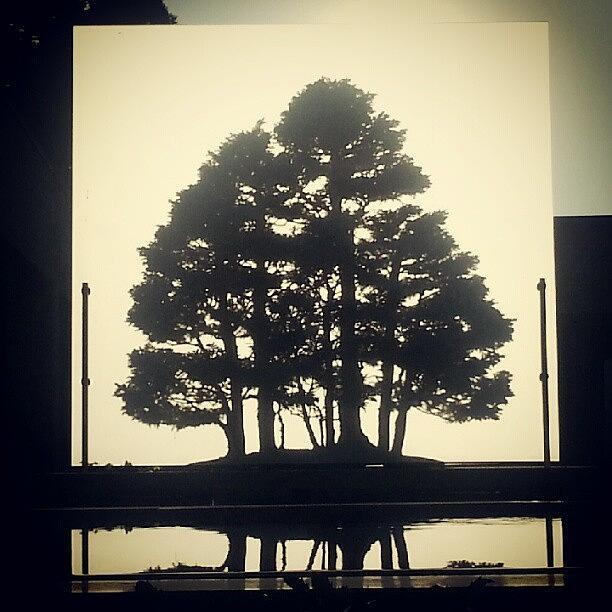 Bonsai Photograph - Bonsai Shadow by Jill Tuinier