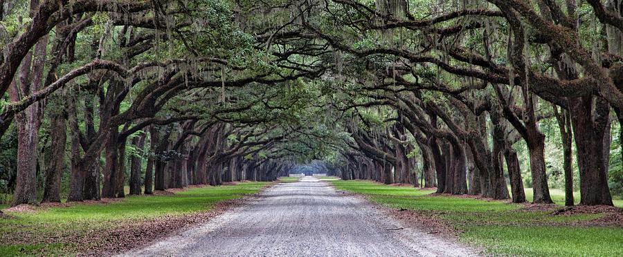 Boone Hall Plantation Photograph by Esther Branderhorst