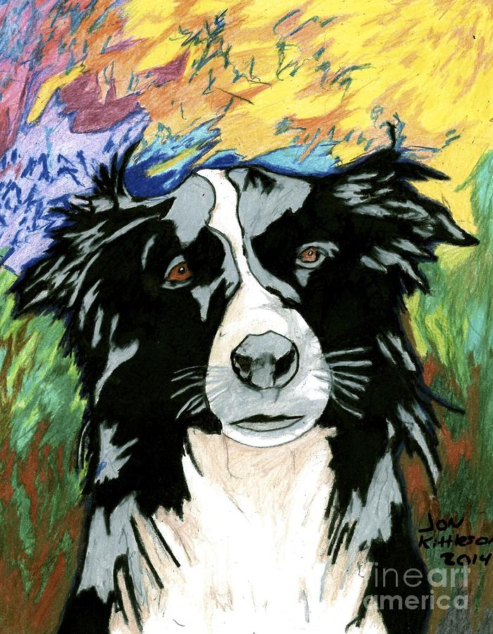 Border Collie Drawing by Jon Kittleson
