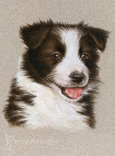 Border Collie Puppy Mixed Media - Border Collie Puppy Portrait by Victor Powell