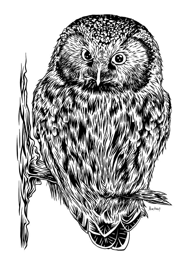 Boreal Owl White Digital Art by Alam Hanafi on saw-whet owl house, great horned owl house, barred owl house, eastern screech owl house, western screech owl house,