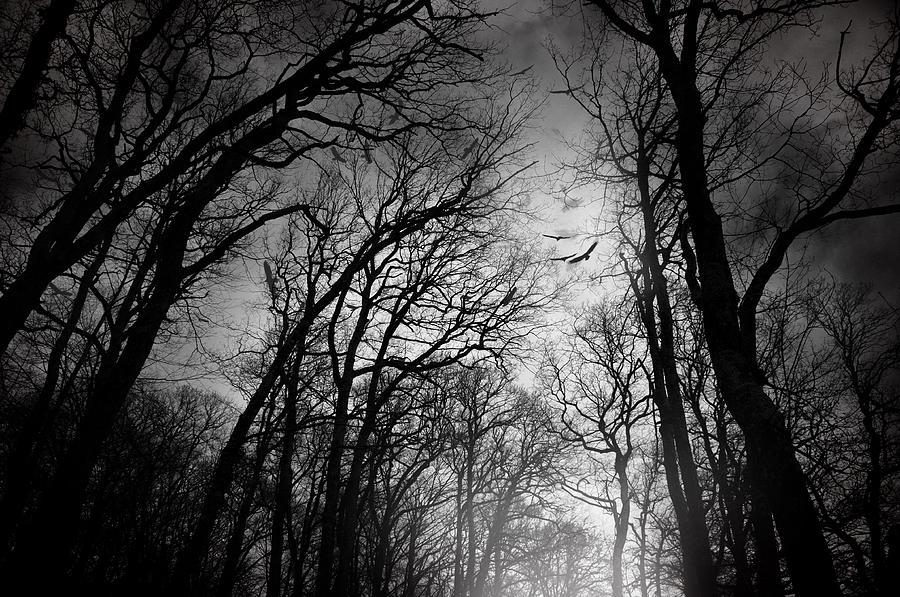 Forest Photograph - Born Of Osiris by Taylan Apukovska