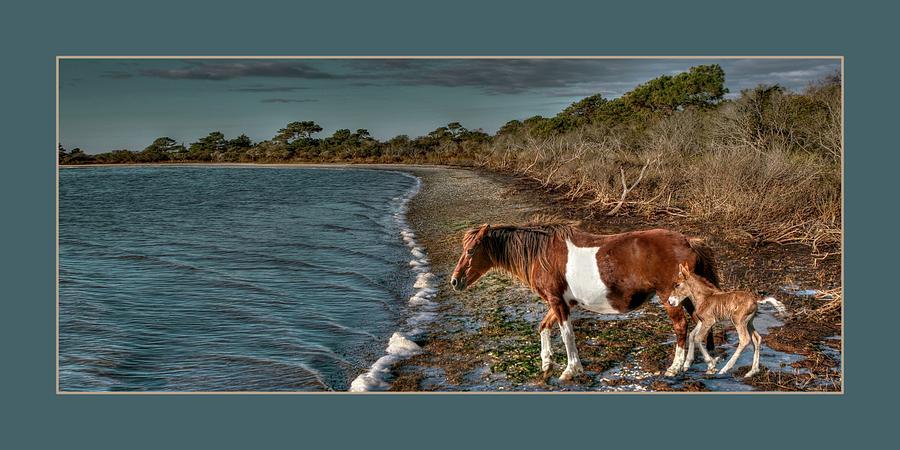Assateague Island Photograph - Born Wild by Tammy Thompson