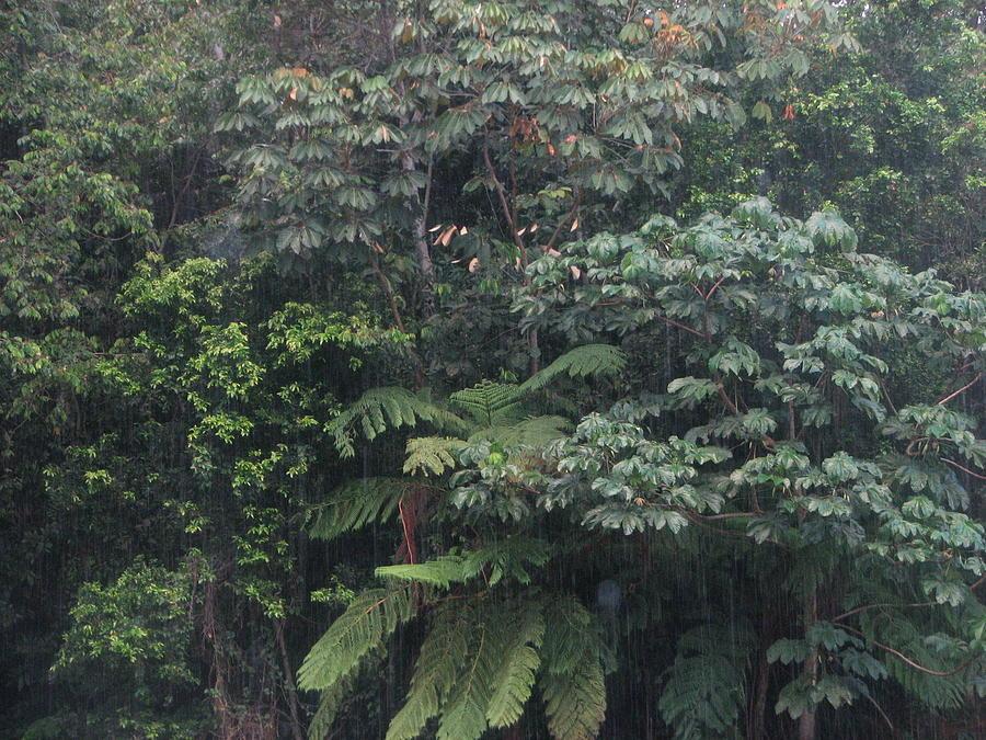 Bosque by Aurora Levins Morales
