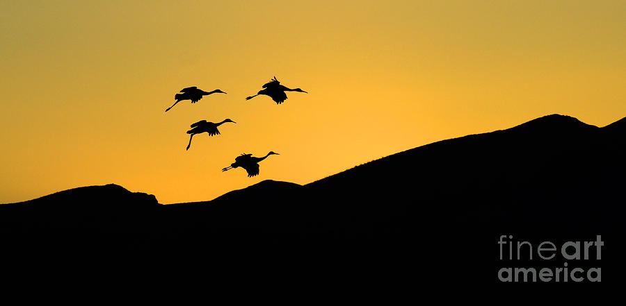 Bosque Del Apache Photograph - Bosque Del Apache Last Light by Bob Christopher