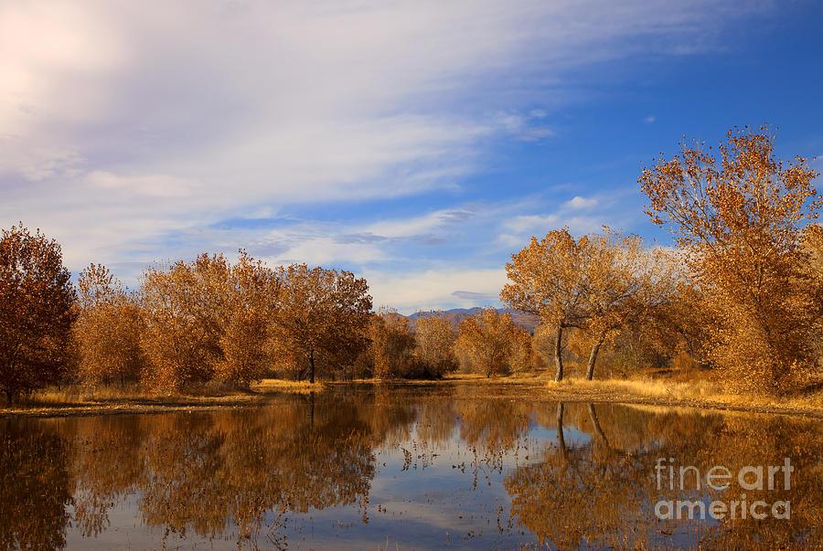 Bosque Del Apache Photograph - Bosque Del Apache Reflections by Mike  Dawson