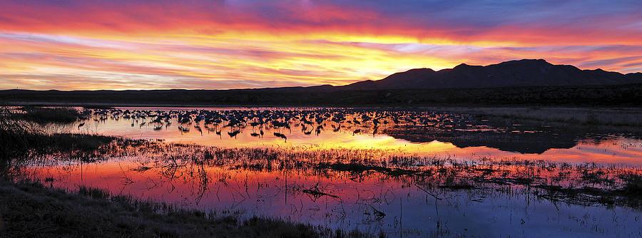 Panorama Photograph - Bosque Del Apache by Steven Ralser