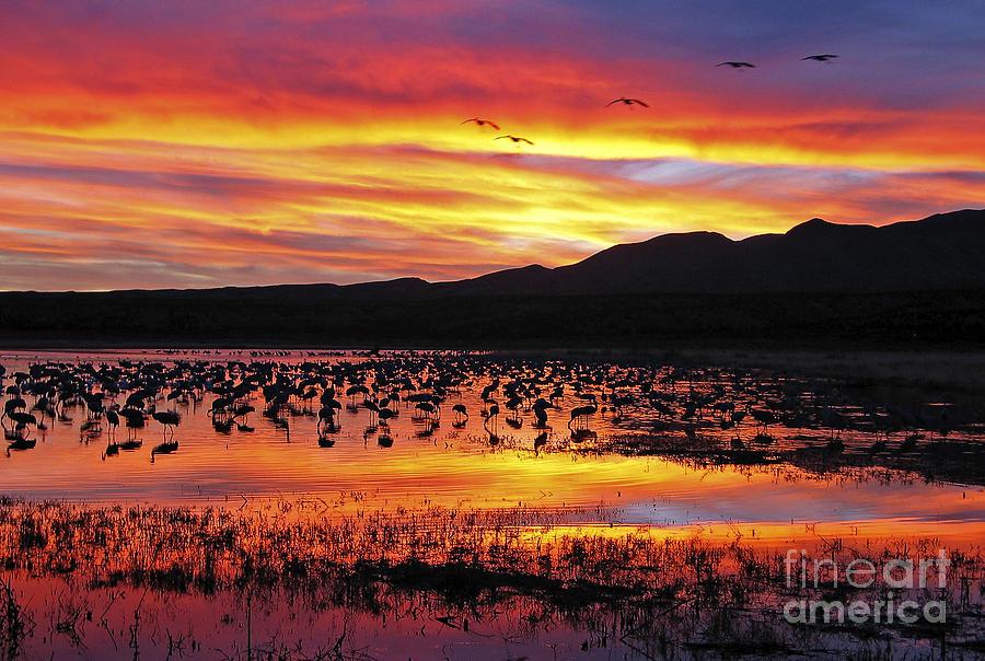 Sandhill Cranes Photograph - Bosque Sunset II by Steven Ralser