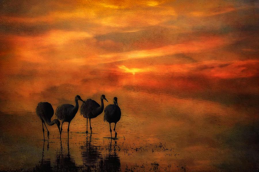 Sandhill Cranes Photograph - Bosque Sunset by Priscilla Burgers