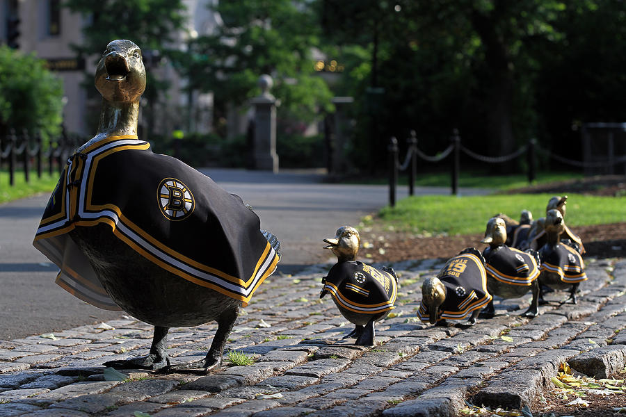 Bruins Photograph - Boston Bruins Ducklings by Juergen Roth