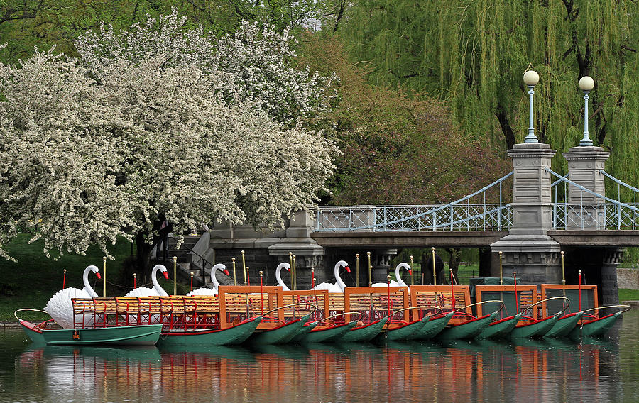 Swan Photograph - Boston Swan Boats  by Juergen Roth