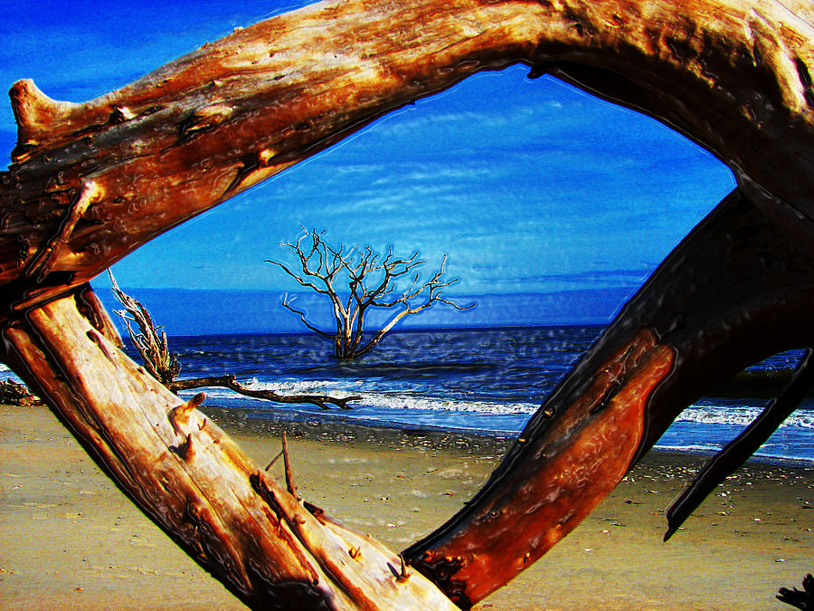 Botany Bay Photograph - Charleston Sc Botany Bay by Ella Char