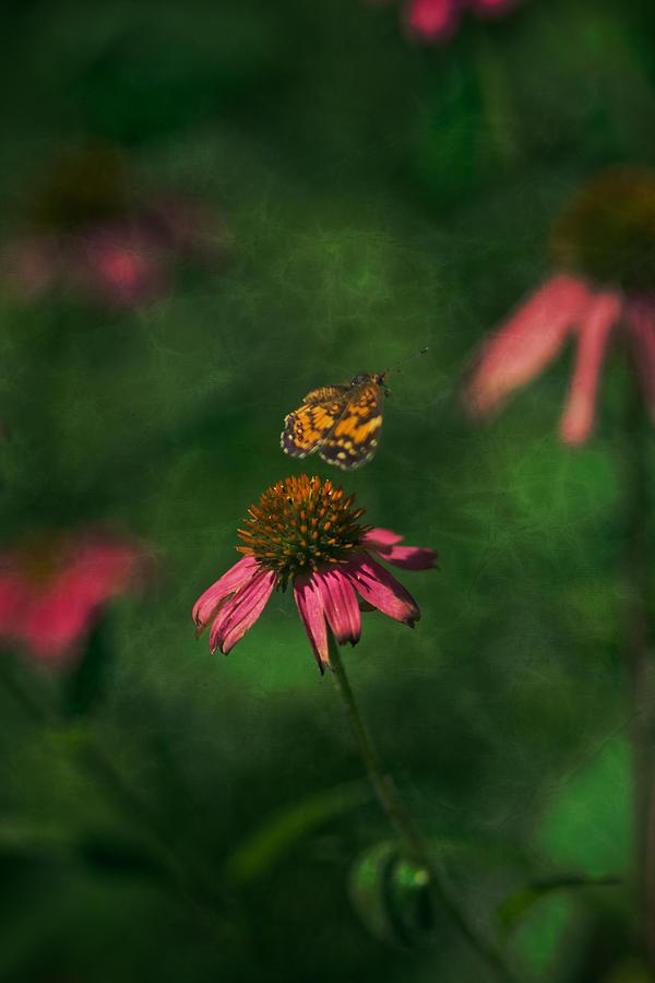 Butterflies Photograph - Bounce by Kim Henderson