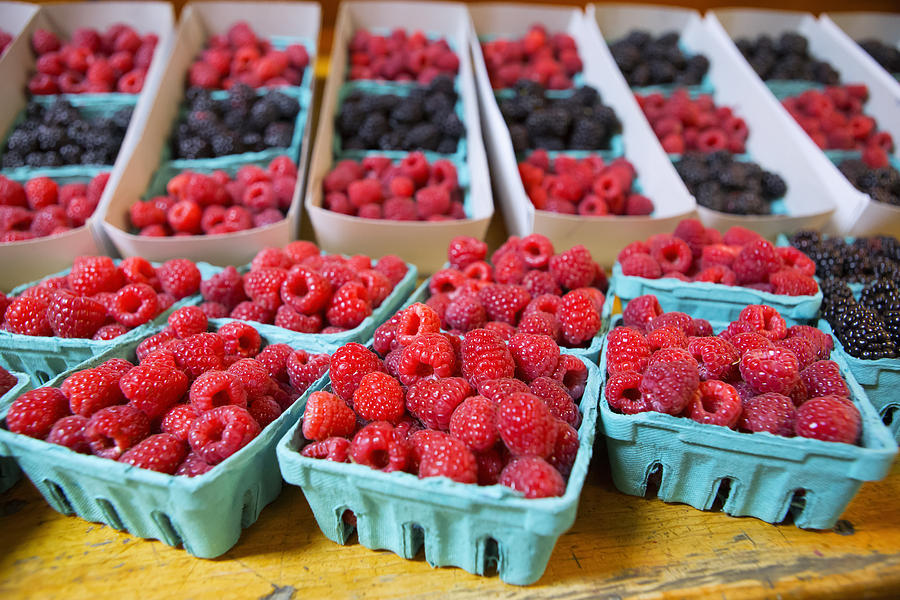 Raspberries Photograph - Bounty Of Berries by Caitlyn  Grasso