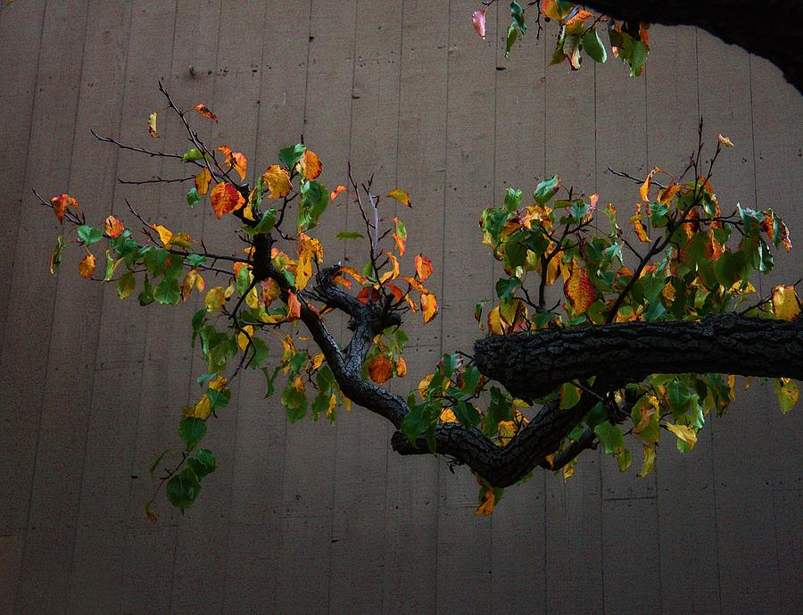 Late Photograph - Bouquet From Autumn Leaves.three. by Viktor Savchenko