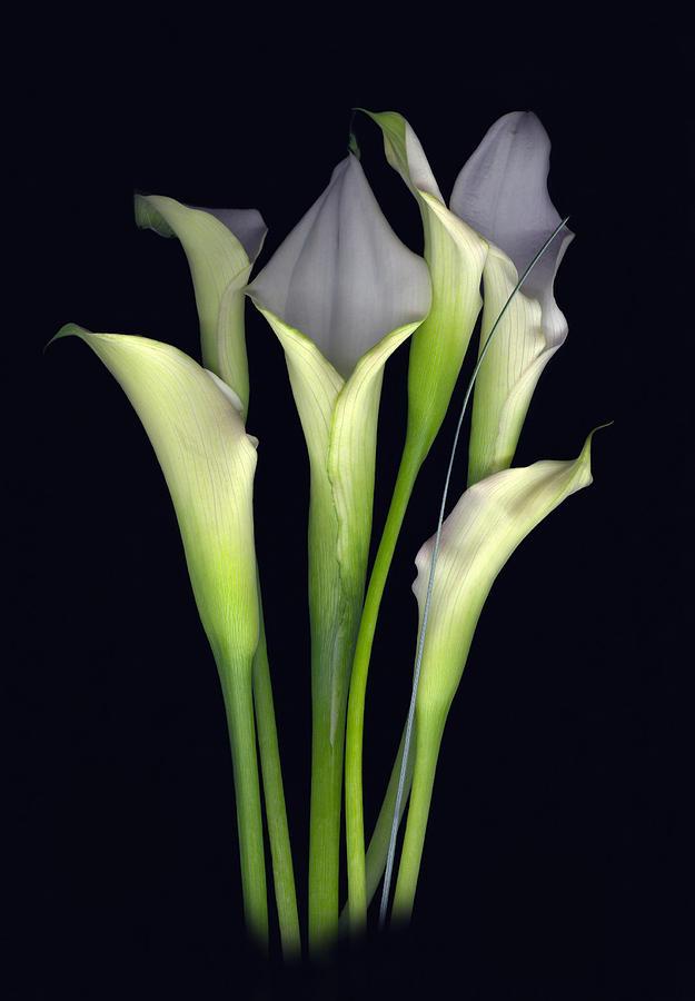 Calla Digital Art - Bouquet of Callas by Sandi F Hutchins