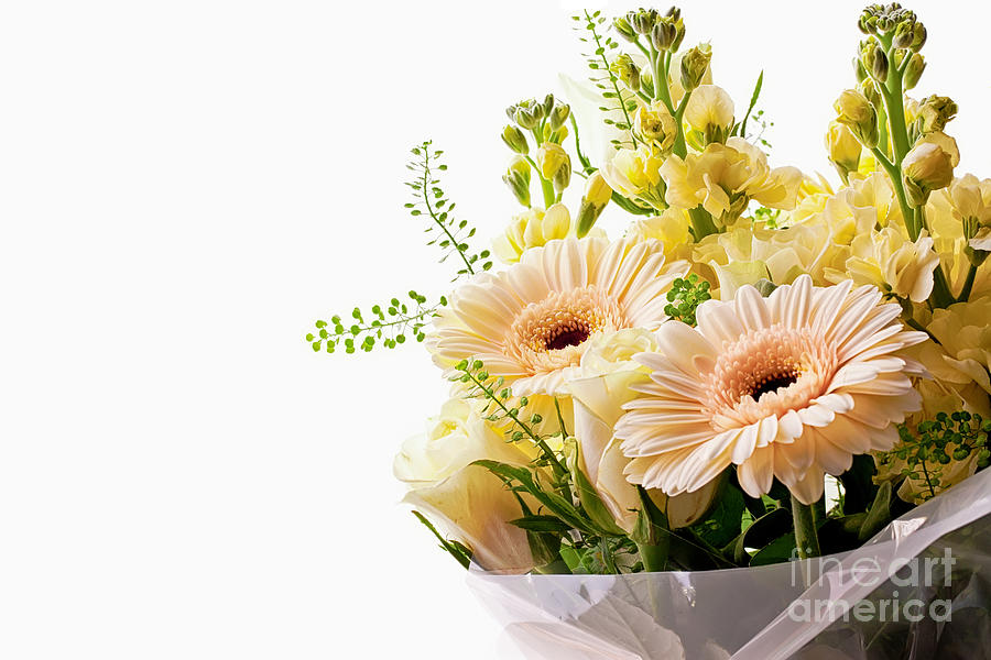 Bouquet Of Flowers On White Background Photograph by Simon Bratt ...