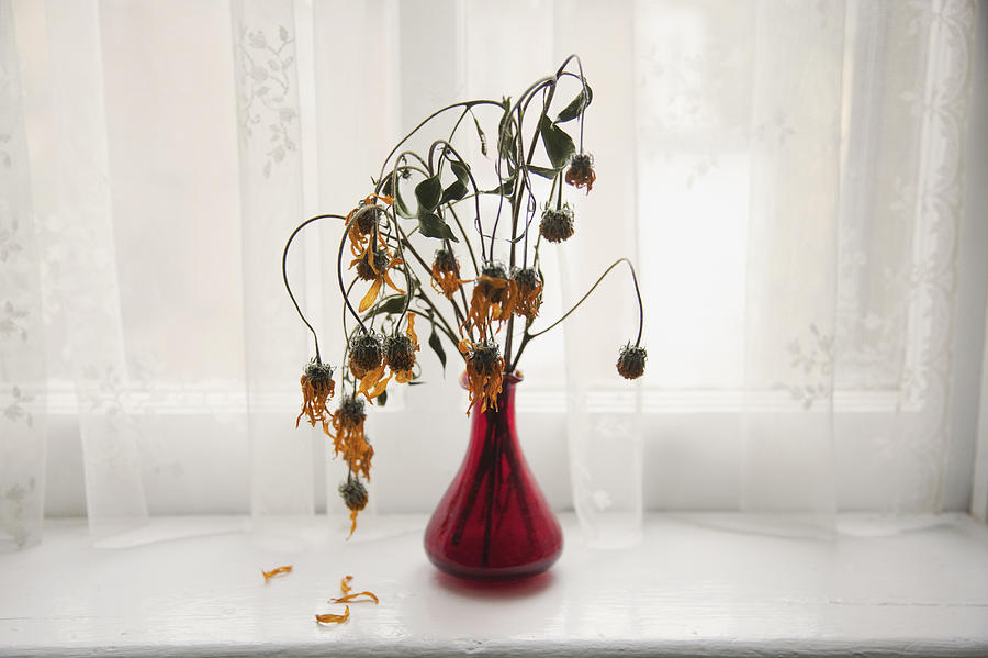Bouquet of wilting flowers in windowsill Photograph by Shestock