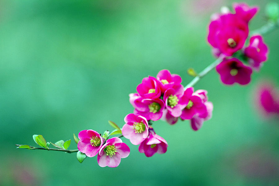 Flowers Photograph - Bouquet On A Limb by Rebecca Cozart