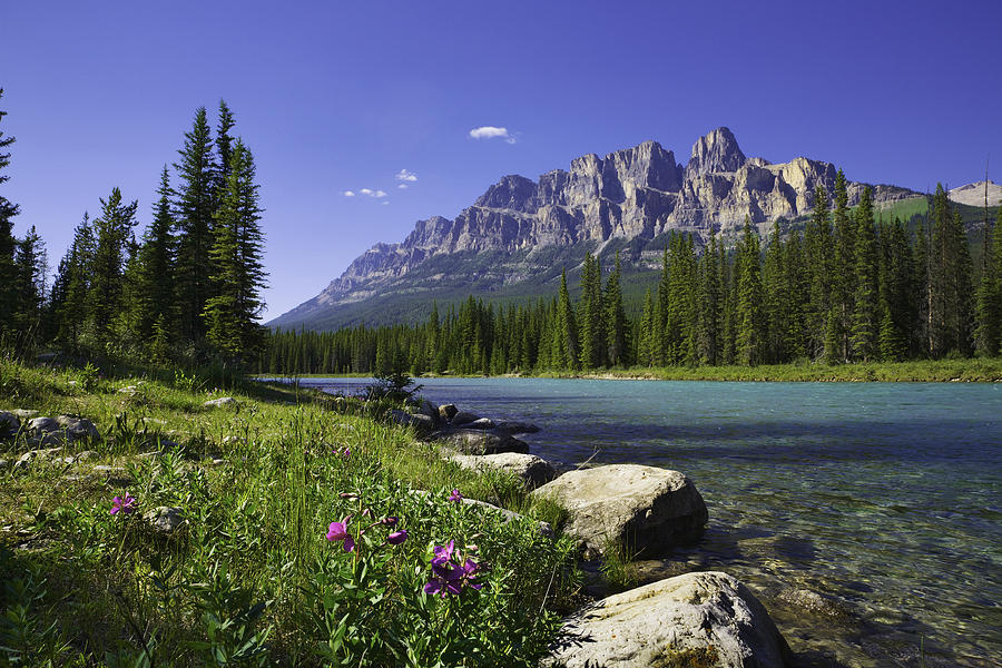Bow River, Castle Mountain, Banff National Park Canada, wildflowers, copyspace Photograph by Dszc