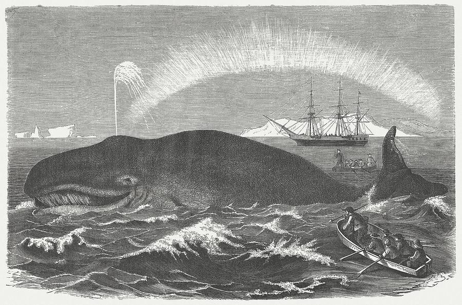 Bowhead Whale Is Hunted, Wood Digital Art by Zu 09