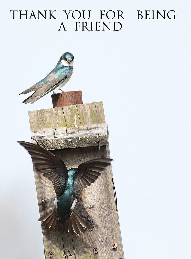 Birds Photograph - Box 15 The Introduction by Michael Rucci